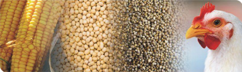 Food & feed analysis
